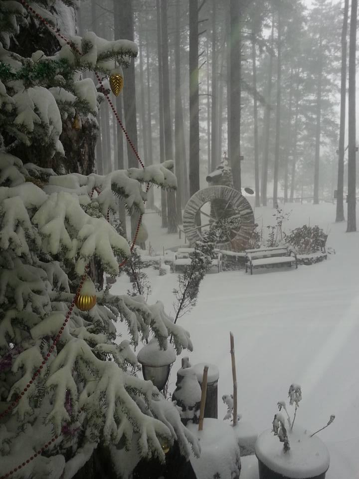weihnachtlicher Wald im Park Orman Restaurant